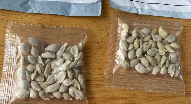 O mistério dos pacotes de sementes enviadas pelo correio nos EUA